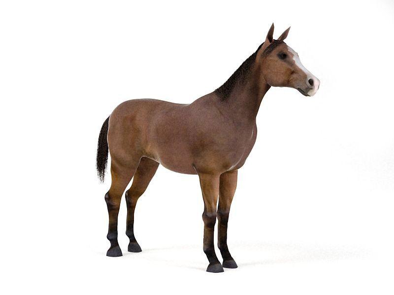 Horse-3D-Model-1