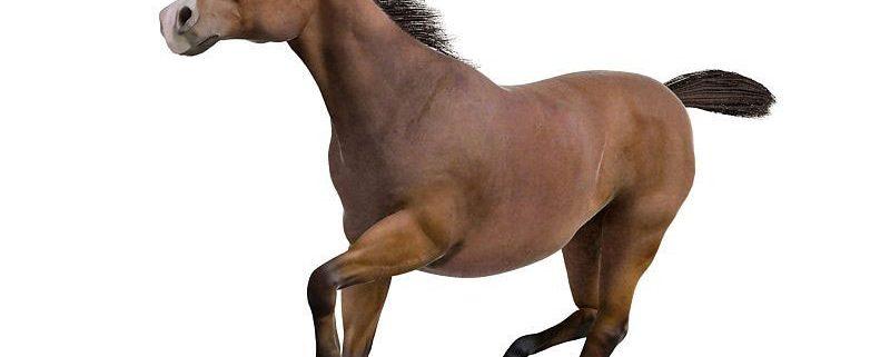 Horse-3D-Model-2