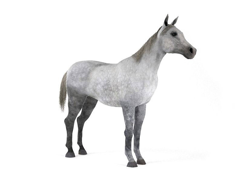 Horse-3D-Model-3
