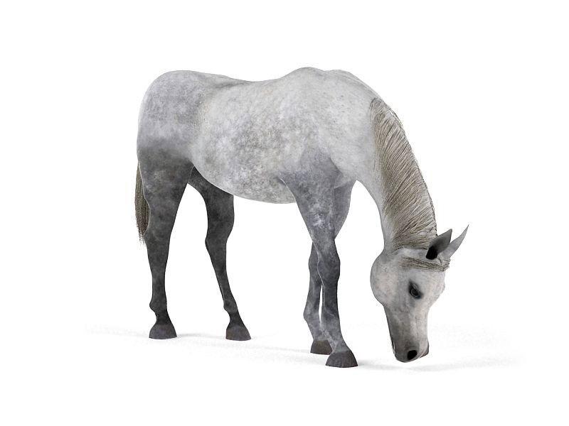Horse-3D-Model-4
